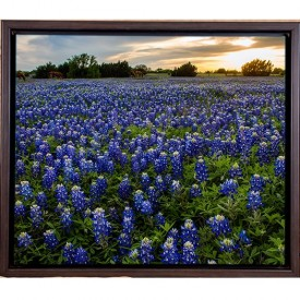 Texas Bluebonnets, Framed Photograph